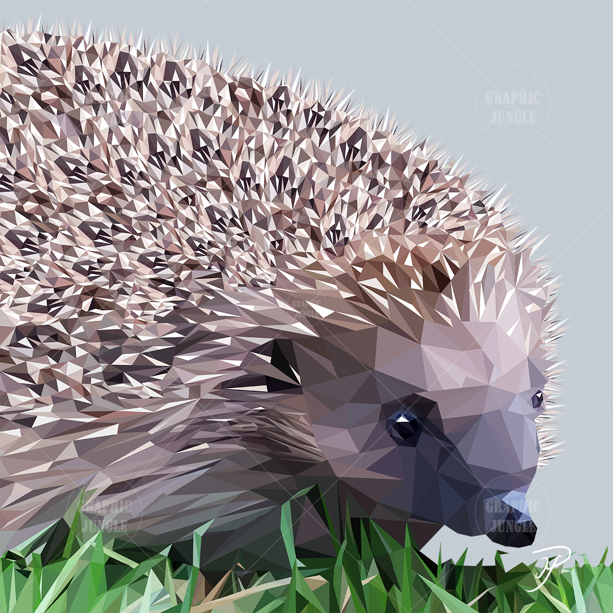 Hedgehog - Graphic Jungle